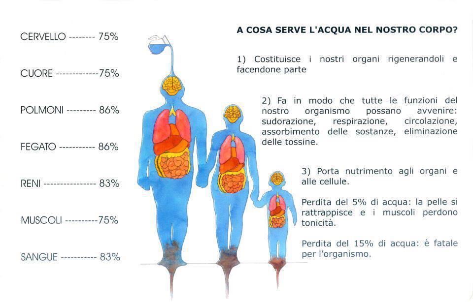 A cosa serve l 39 acqua nel nostro organismo - Cos e l abbattitore in cucina ...